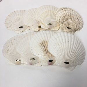 Genuine Baking Sea Shells